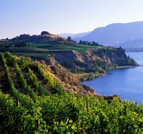 Vineyard Overlooking Cliff