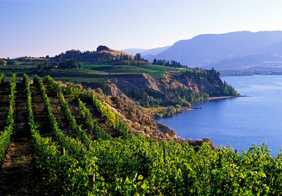 Vineyard Overlooking Cliff